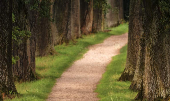 trees with a running path between them